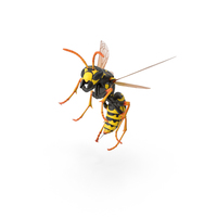 Paper Wasp PNG & PSD Images