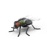 Green Fly PNG & PSD Images