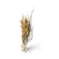 Autumn Ivy PNG & PSD Images