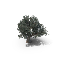 Olive Tree PNG & PSD Images