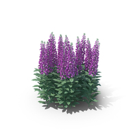 Foxgloves PNG & PSD Images