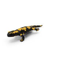 Salamander Running PNG & PSD Images