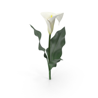 Calla Lily PNG & PSD Images