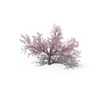 Japanese Cherry Tree PNG & PSD Images