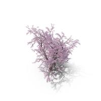 Sakura Big Lilac PNG & PSD Images