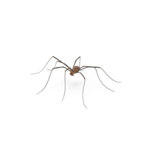 Daddy Long Legs PNG & PSD Images