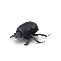 Black Scarab Beetle PNG & PSD Images