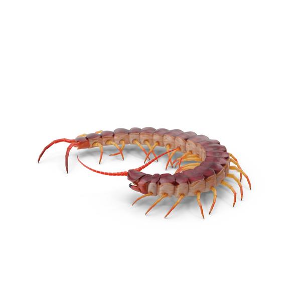 Centipede PNG & PSD Images