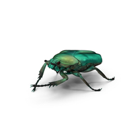 Green Scarab Beetle PNG & PSD Images