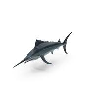 Black Marlin PNG & PSD Images