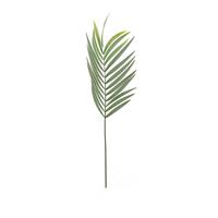 Faux Palm Leaf PNG & PSD Images
