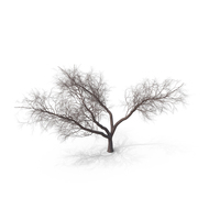 Bare Japanese Cherry Tree PNG & PSD Images