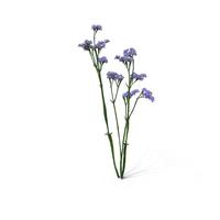 Wavyleaf Sea Lavender PNG & PSD Images
