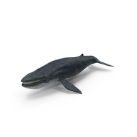 Blue Whale PNG & PSD Images