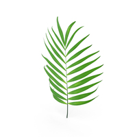 Parlour Palm Branch PNG & PSD Images