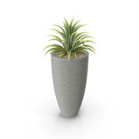 House Plant PNG & PSD Images