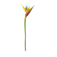 Bird-of-Paradise Flower PNG & PSD Images