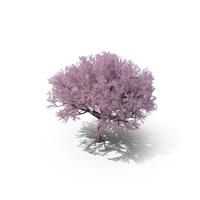 Sakura Lilac PNG & PSD Images