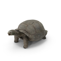 Tortoise PNG & PSD Images