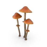 Pholiotina Rugosa Mushrooms PNG & PSD Images