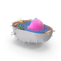 Animal Cell PNG & PSD Images