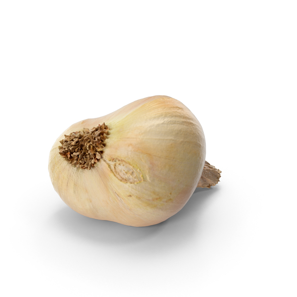 Yellow Onion PNG & PSD Images