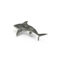 Tiger Shark PNG & PSD Images