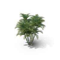 Areca Palm Tree PNG & PSD Images