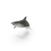 Tiger Shark Attack PNG & PSD Images