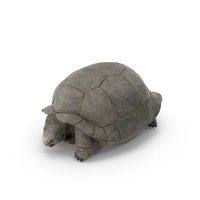 Galapagos Tortoise PNG & PSD Images