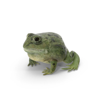 Pixie Frog PNG & PSD Images