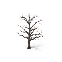 Dead Tree PNG & PSD Images