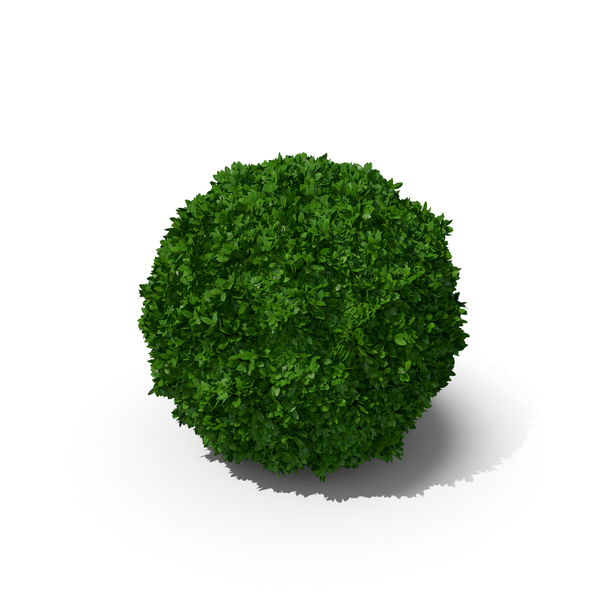 Boxwood Sphere PNG & PSD Images