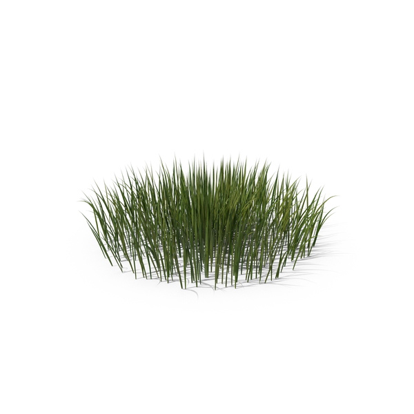 Patch of Grass PNG & PSD Images