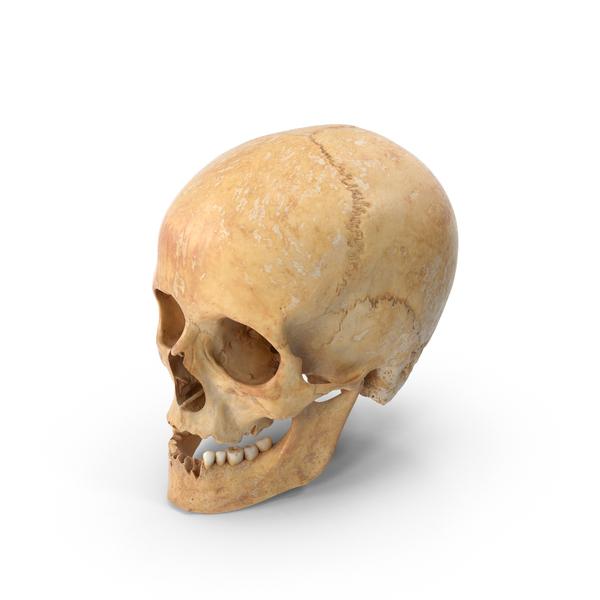 Human Female Skull Damaged PNG & PSD Images