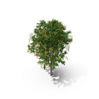 Golden Tree PNG & PSD Images