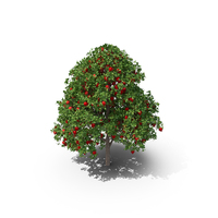 Pomegranate Tree PNG & PSD Images