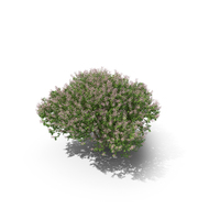 Soapberry Tree PNG & PSD Images
