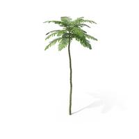 Brazilian Fern Tree PNG & PSD Images