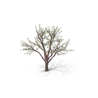 Flowering Tree PNG & PSD Images