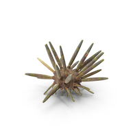Slate Pencil Urchin PNG & PSD Images