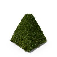 Pyramid Hedge Shrub PNG & PSD Images