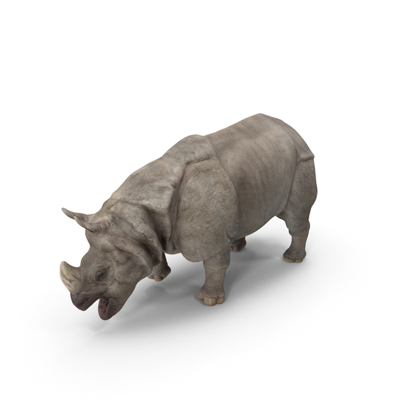 Indian Rhinoceros PNG & PSD Images