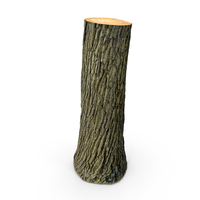 Tree Trunk PNG & PSD Images