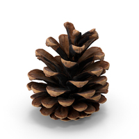 Pine Cone PNG & PSD Images
