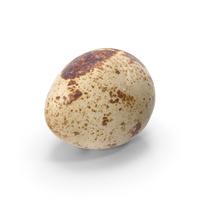 Quail Egg PNG & PSD Images
