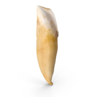 Incisor Lower Jaw Broken PNG & PSD Images