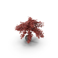 New Potted Plant PNG & PSD Images