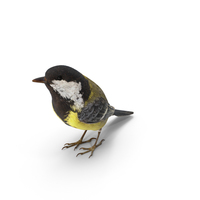 Great Tit PNG & PSD Images