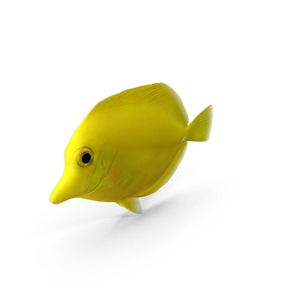 Yellow Tang PNG & PSD Images